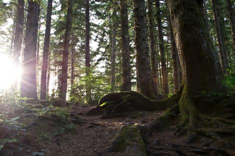Deep Woods and Sun Flares [darker]