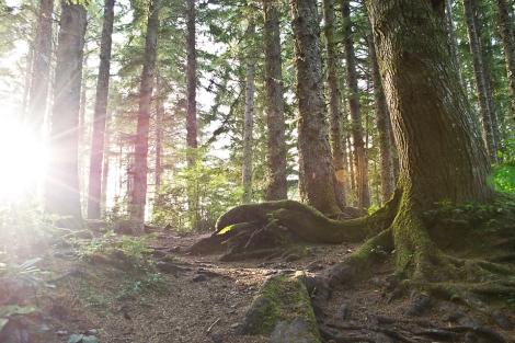 Deep Woods and Sun Flares [lighter]