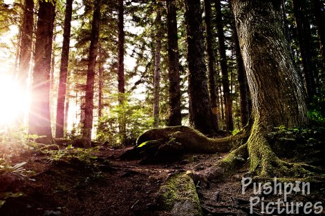 Deep Woods and Sun Flares